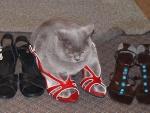 Кошка в босоножках