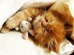 кошка Гуся