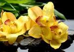орхидея777