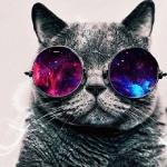 Hope-cat