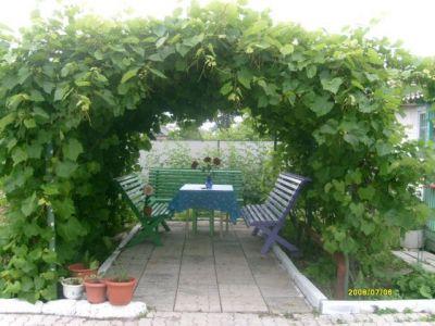 Арки под виноград фото