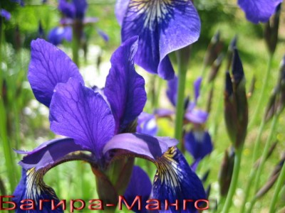 Цветок домашний расцвел