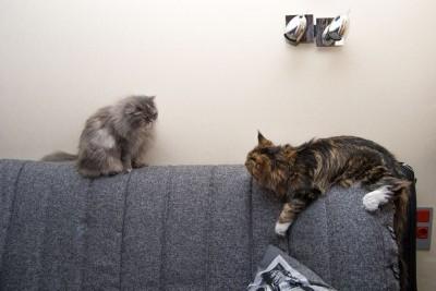 Котятам месяц а они не едят самостоятельно