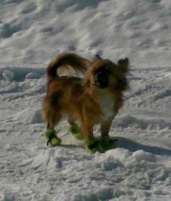 Вязание носок для собак