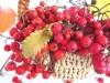 Домашнее вино из  Красной рябины